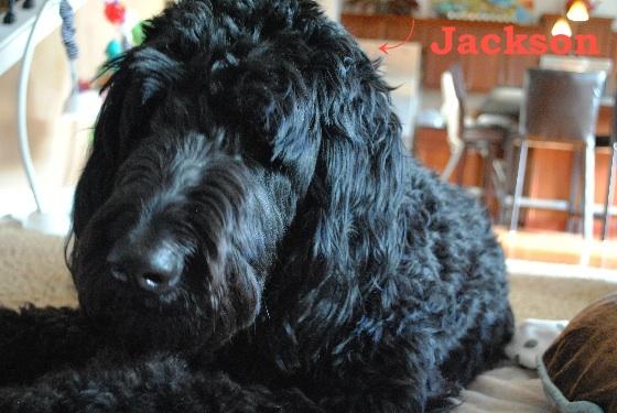 Jackson - Blog