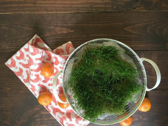 grass4
